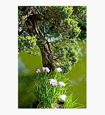 SF Japanese Tea Garden Study 25  Photographic Print