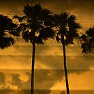 Layered Sunset by Barbara Manis