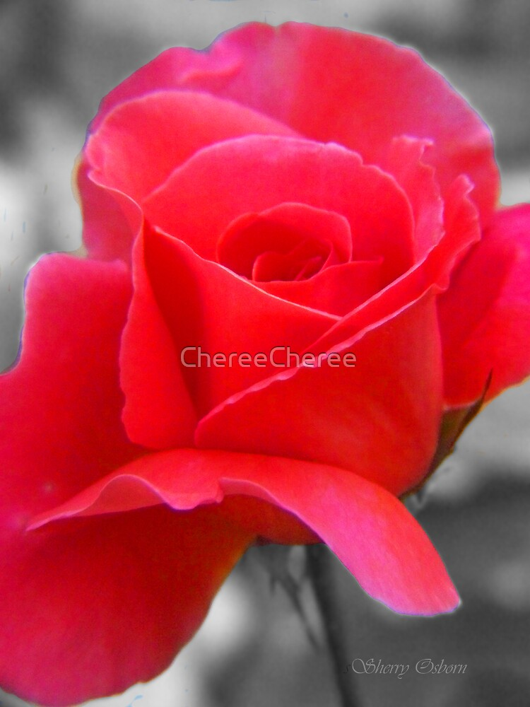 Rose In Black and White by ChereeCheree