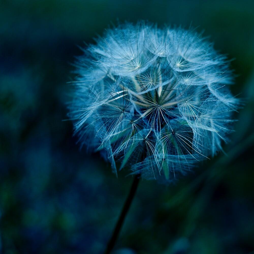 I Will Blow your Blues Away by Johanne Brunet