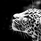 Monochrome Leopard by Wayne Gerard Trotman