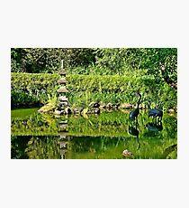 SF Japanese Tea Garden Study 27  Photographic Print