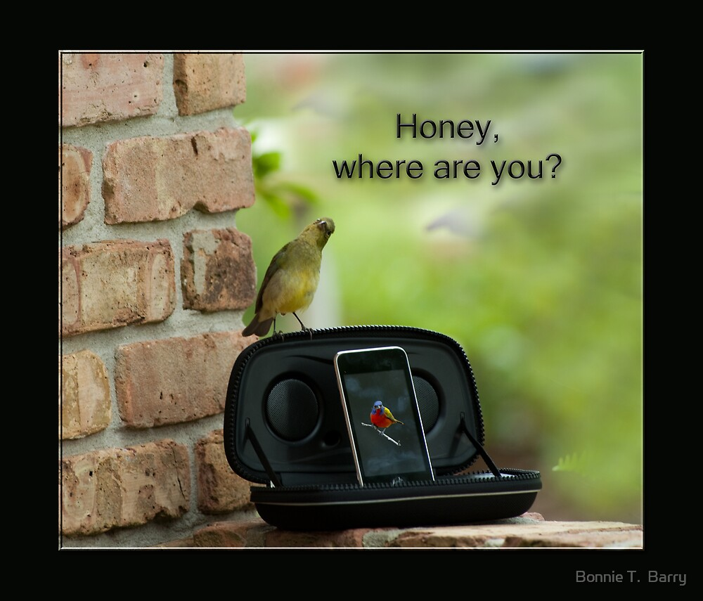 Honey, where are you? by Bonnie T.  Barry