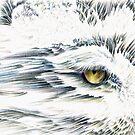 Lumen Eyes by D Y Hide