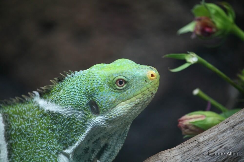 Fijian Iguana by Leanne Allen