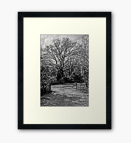 T. E. Laurence's Tree Framed Print