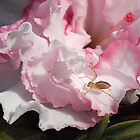 Azalea,  Pink frilly with spider by Bev Pascoe