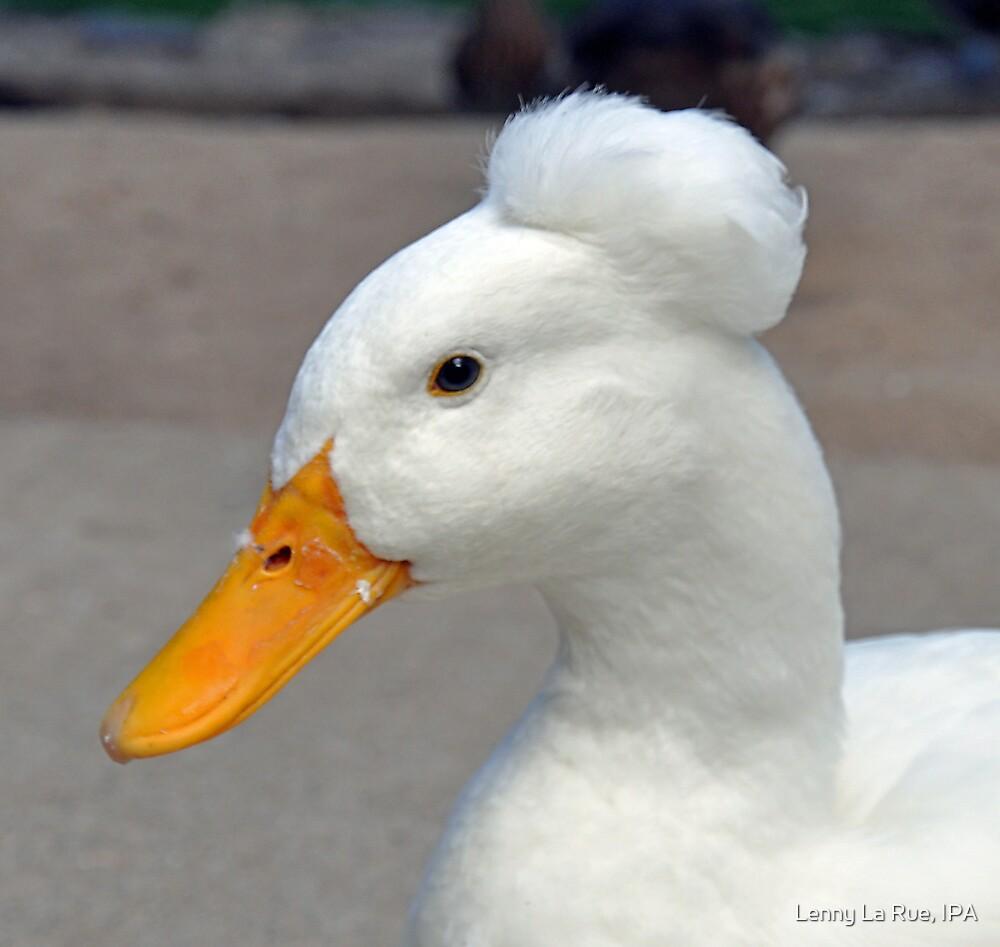 Punk Duck by Lenny La Rue, IPA