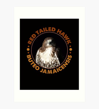 Beautiful Red Tailed Hawk Portrait for Falconers and Bird Watchers Art Print