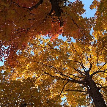 Colourful Autumn Duet by GeorgiaM