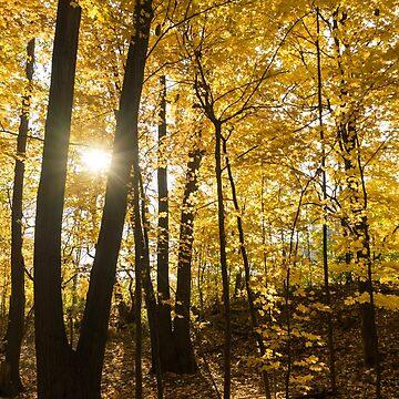 Golden Forest Sunburst  by GeorgiaM