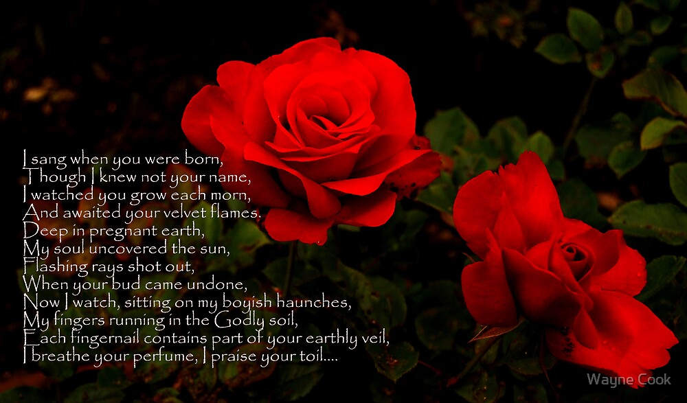 Rose of Seteais by Wayne Cook