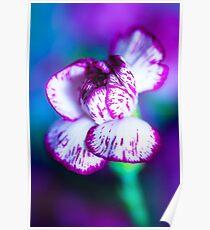 Colour Of Life XII [iPad case / Phone case / Laptop Sleeve / Print / Clothing / Decor] Poster