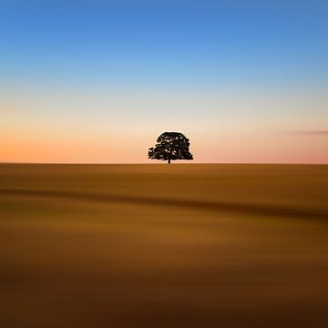 Focus on One Thing at a Time an isolated oak tree by MarniePatchett