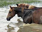 "HORSES WITH ATTITUDE, NO. 7, ""RACE YA ACROSS THE POND, JOE, LOSER BUYS A ROUND!,"" Photo, for prints and products by Bob Hall©"