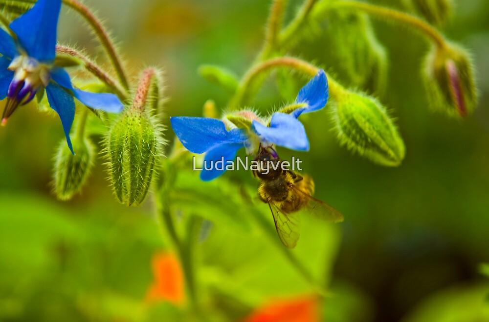 Sweet bee  by LudaNayvelt