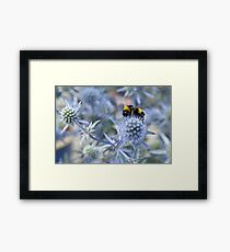 Sea Holly Framed Print
