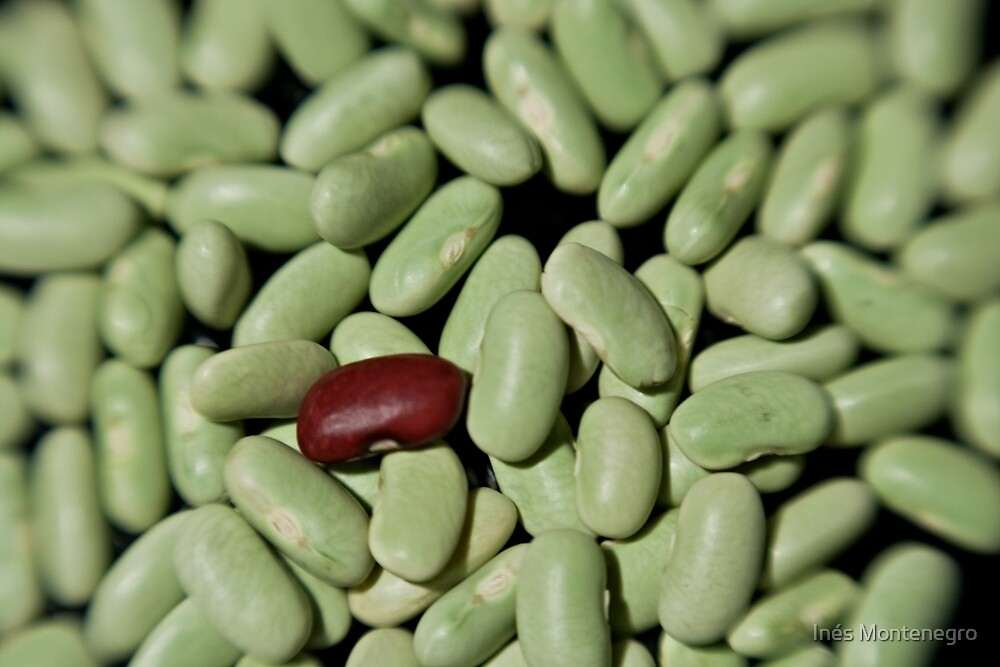 Beans V by Inés Montenegro