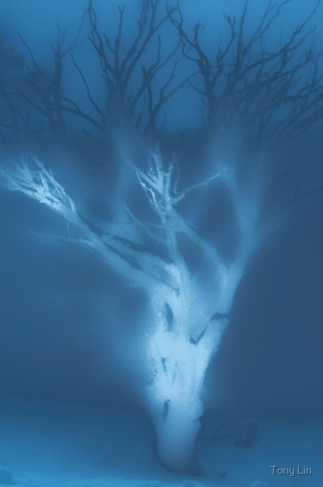 Ghost of a Tree by Tony Lin