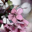 Spring Blossoms by Kathy Nairn