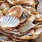 Seashells, Seashells by Kasia-D
