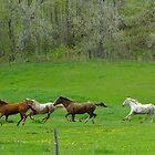 Run! by Tracy Wazny