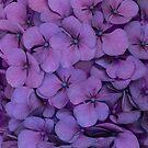 Purple hydrangea by JBlaminsky