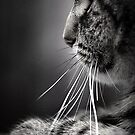 Whiskers by Basia McAuley