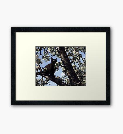 Cat In An Apple Tree Framed Print