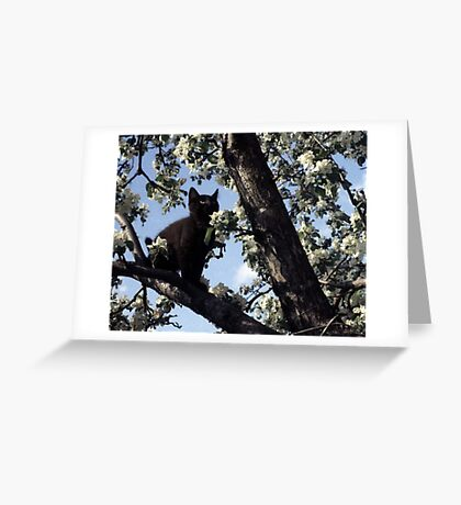 Cat In An Apple Tree Greeting Card