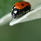 Hello there, little fella... by George Parapadakis ARPS (monocotylidono)