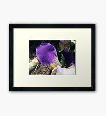 Iris Petal Framed Print