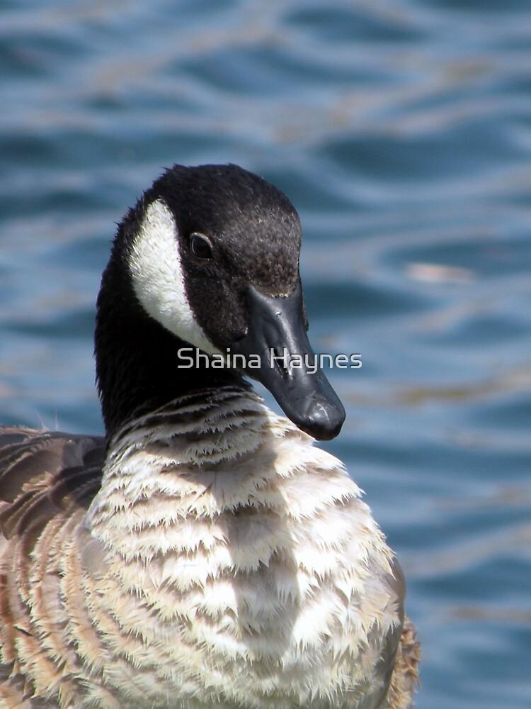 Canada Goose by Shaina Haynes