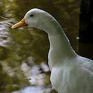white duck by Perggals© - Stacey Turner