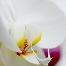 Orchid by Adrienne Berner