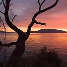 Sunset Tree by Appel