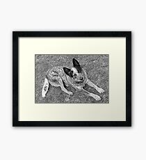 Matthew Flinders Framed Print
