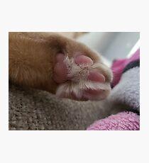 Fur baby Photographic Print