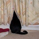 Peeping Tom by Beverley  Johnston