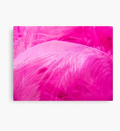 Fairy Feathers Canvas Print