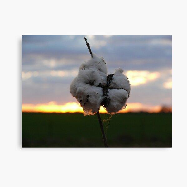 Cotton Fields back home (2) Canvas Print
