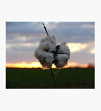 Cotton Fields back home (2) Photographic Print