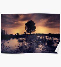 Wetlands-split toned Poster