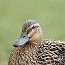 Quackers (X) by Edward Gunn