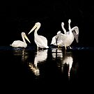 Pelicans in a Lake by gemlenz