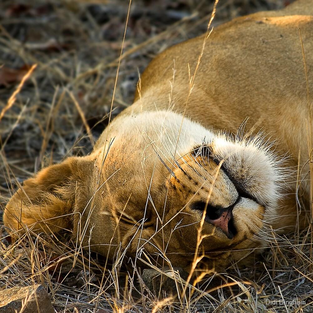 Kruger National Park, South Africa. 2009 VI by Didi Bingham