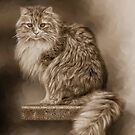 Her Majesty by pat gamwell
