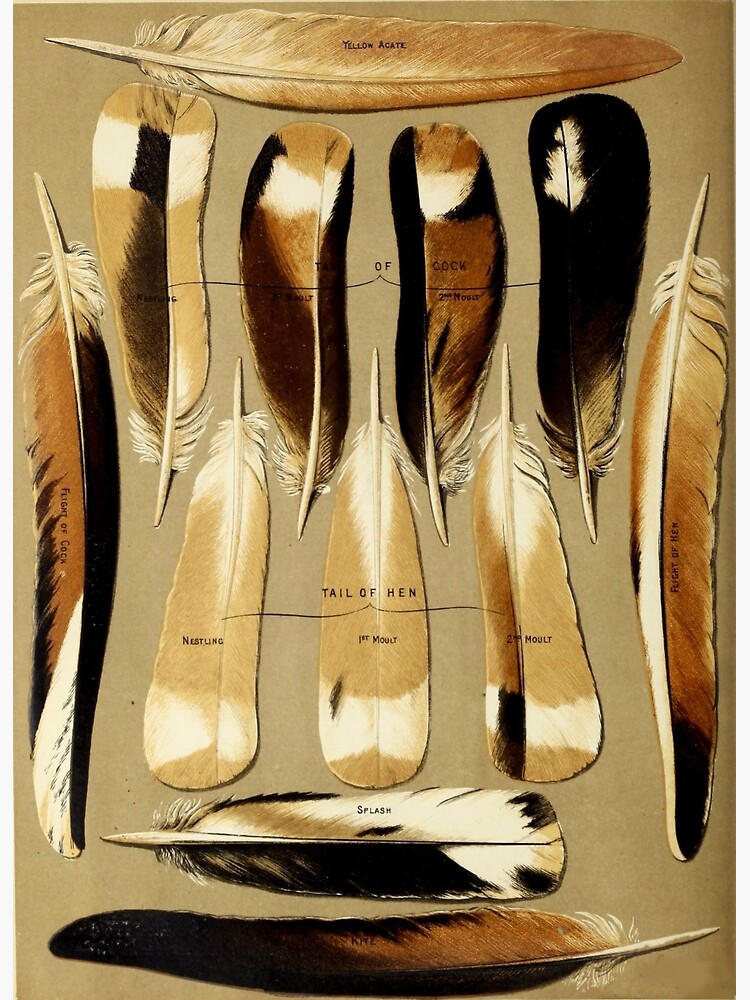 Pigeon Feathers by bluespecsstudio