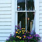 Antique Shop Window by raindancerwoman