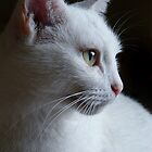 Cats and Kittens - Photography by Sally Green by Sally Green